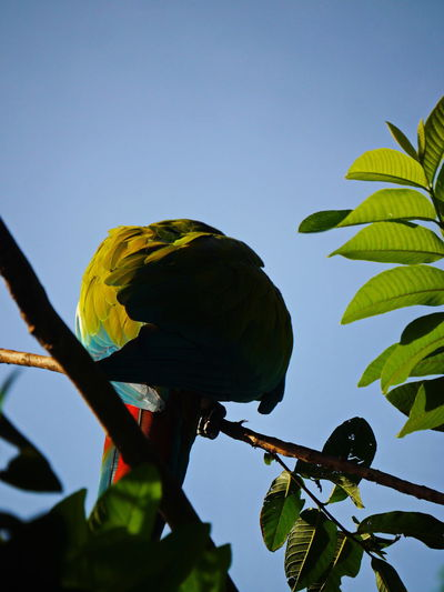 Low angle view of parrot perching on tree against sky