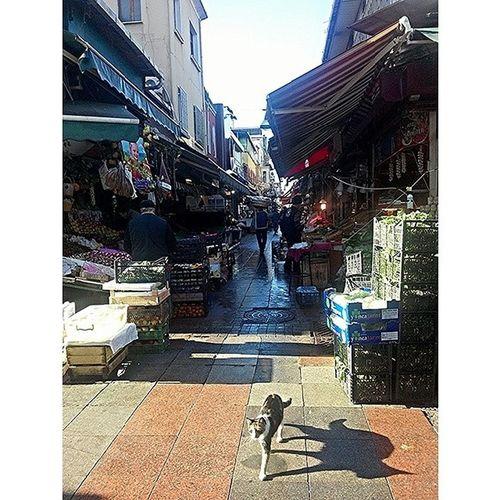 Cats Cat Bazaar Kadikoy_bazaar kadıköy life moorning greengrocer like light life city people look istanbul turkey