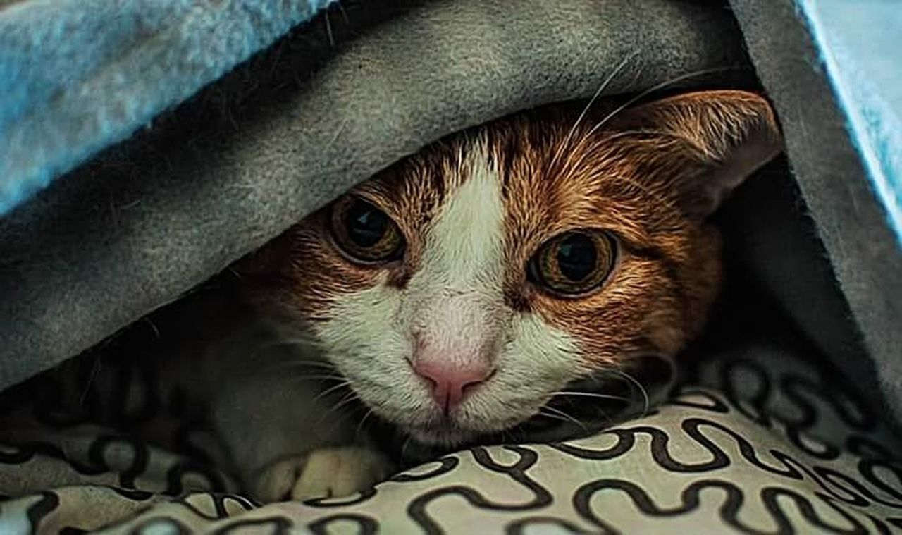 pets, domestic cat, one animal, eye, domestic animals, animal, indoors, animal themes, feline, mammal, no people, cute, portrait, close-up, day, kitten