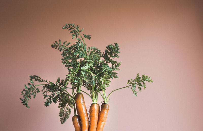 Close-up of plant against orange background