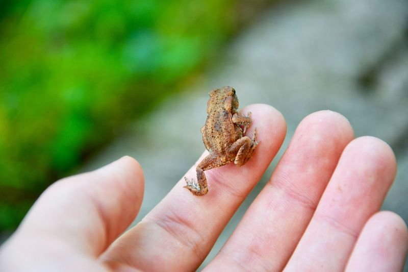 Tiny frog sitting on the hand