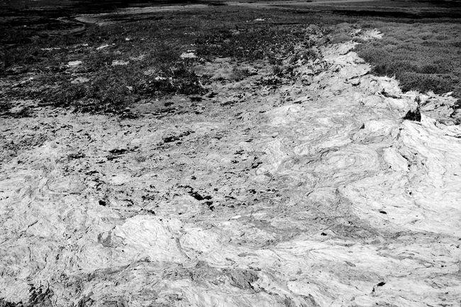 Soap Scum Black & White Seashore Seaweed Blackandwhite Day Nature No People Outdoors Scum Water