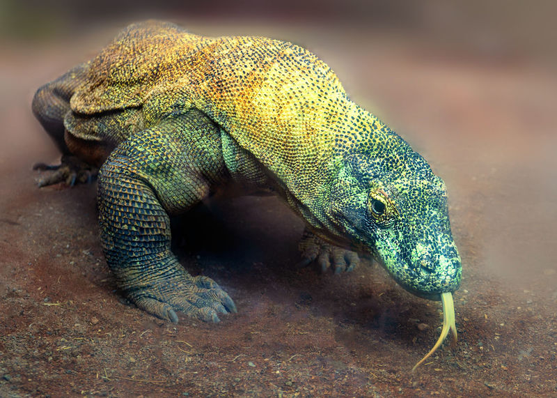 50+ Comodo Dragon Pictures HD | Download Authentic Images on