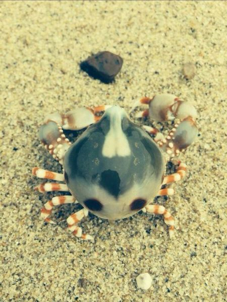 Spider Crab Beach Nature Pure Life Cute Lovely Hope Loving Memery