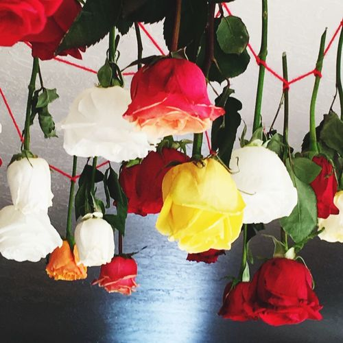 Funeral Roses Mourning Funeral Roses Leaf Plant Part Flower Plant Close-up Flowering Plant Freshness