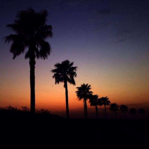 Harmonica StevieWonder Sun Sunset 🎶Redfoo ft. Stevie Wonder - Where the Sun Goes