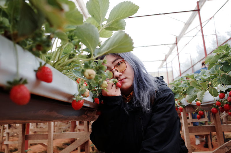 Portrait of young woman holding strawberry standing at farm