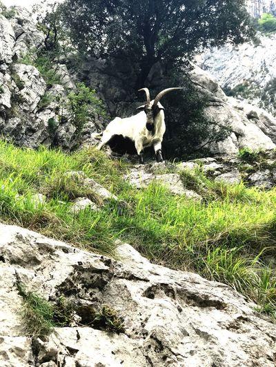 One Animal Animal Themes Animal Mammal Vertebrate Domestic Nature Day No People Grass