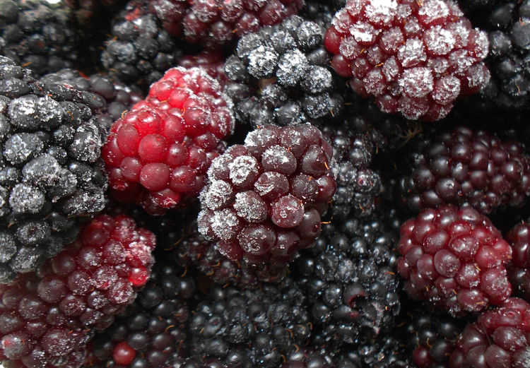 Close-up of raspberries and blackberries during winter