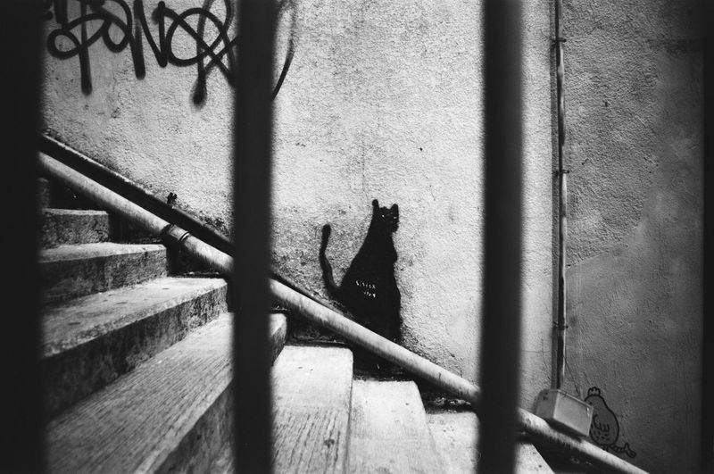 black cat at white wall Film Photography Cat Streetphotography Fujifilm Acros 100 Film Not Dead Yet Minolta X700 Vivitar28mmf25 Shadow Railing Close-up Architecture Built Structure Stairs Focus On Shadow Steps Escalator Hand Rail Stairway Spiral Staircase