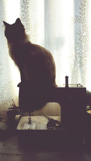 One Animal Animal Themes Indoors  Pets Domestic Cat Mammal No People Day Domestic Animals