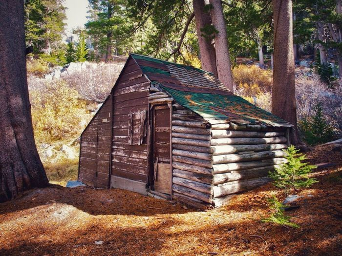 Mammoth Lakes, CA Lake George Lake George Old Cabin Tree Plant Nature Built Structure Sunlight Day Beauty In Nature