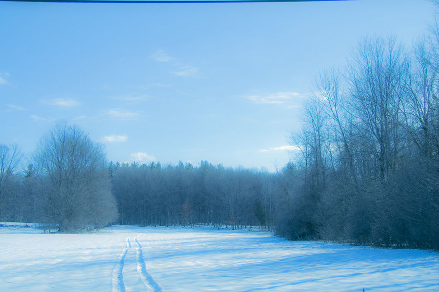 Blue Cloud - Sky Cold Temperature Day Nature No People NY Outdoors Sky Snow Snowing Tree Upstate New York Winter