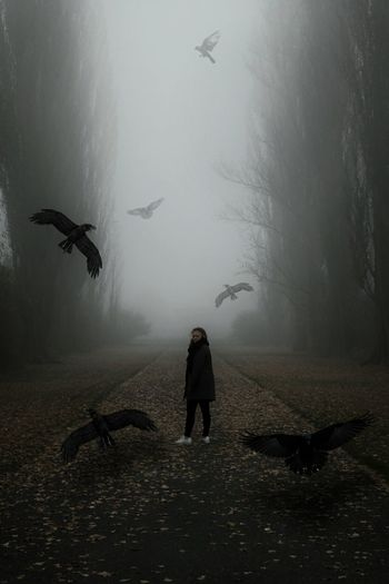 Ravens Flying Around Woman Standing On Street During Foggy Morning