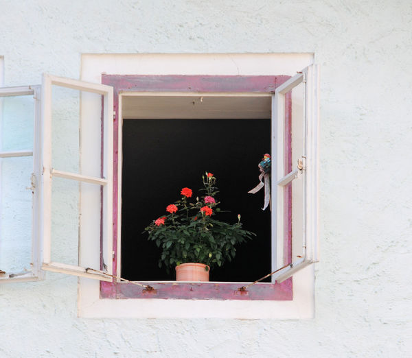 Potted plant on window sill of building