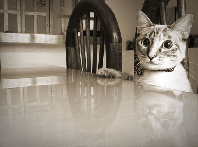 Taking Photos Cat My Cat Check This Out Pets Blackandwhite Cute
