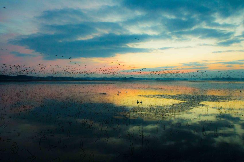 Beauty In Nature Light Sky swan Bird Lake