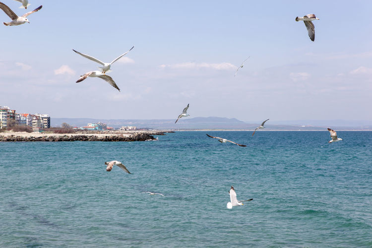 Seagulls Flying Over Sea On Sunny Day