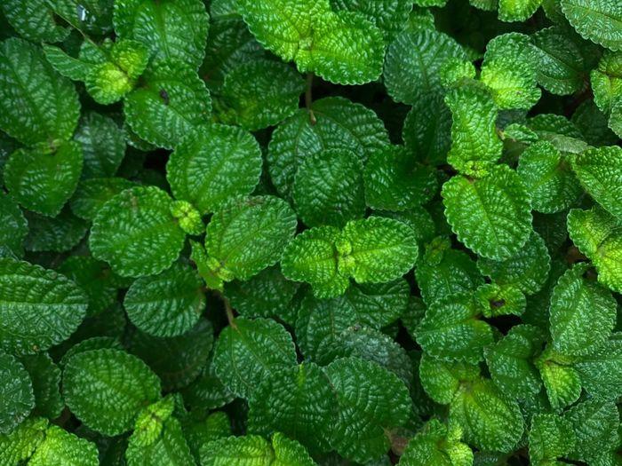 Full frame shot of green plant