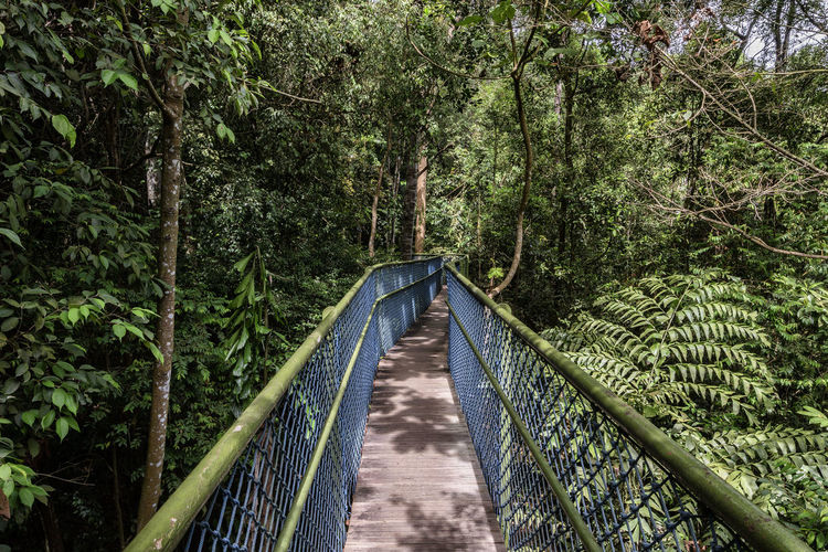Narrow Footbridge Amidst Plants And Trees In Forest