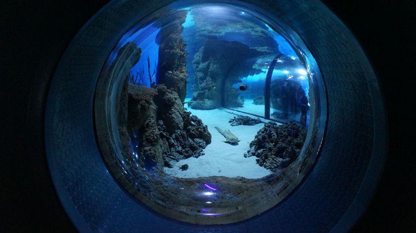 Moscow москвариум VDNH ВДНХ Shark