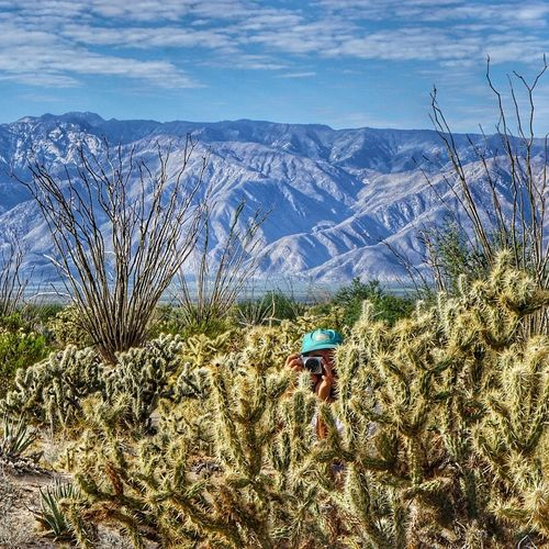 biking around Mexico at the moment, follow on Instagram to see more photos @knock_n_pushTree Nature Mountain Beauty In Nature Landscape Growth Scenics Outdoors Mountain Range Sky Plant No People Day Mirage Desert Photography Camera Photos Candid Photography Enjoy The New Normal My Year My View Uniqueness Miles Away EyeEm Diversity The Secret Spaces The Great Outdoors - 2017 EyeEm Awards The Portraitist - 2017 EyeEm Awards Live For The Story Place Of Heart Sommergefühle Mix Yourself A Good Time Lost In The Landscape Been There. Done That. Go Higher Summer Exploratorium This Is Latin America The Traveler - 2018 EyeEm Awards