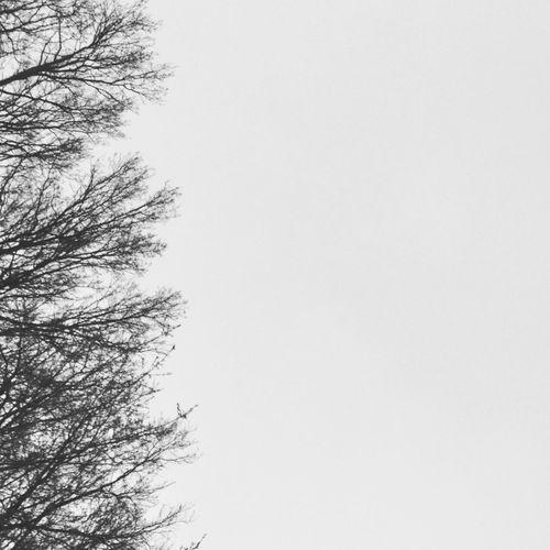 """To grow or not to grow?"" Nature Trees And Sky Black&white Motivo De Vida"