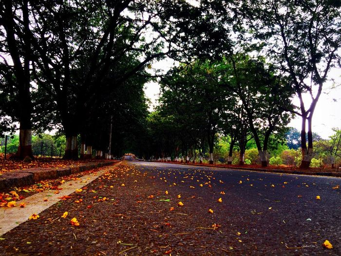 Raining Hanging Out Hello World Relaxing Taking Photos Enjoying Life Trees And Sun Iphonephotography Alone Peace Colors EyeEm 500px IPhone 2016 Earthday EyeEm Best Shots - Nature Eye4photography  Nature_collection EyeEmBestPics Naturelovers Smart Simplicity EyeEm Nature Lover Eyemphotography Hanging Out EyeEm Best Shots
