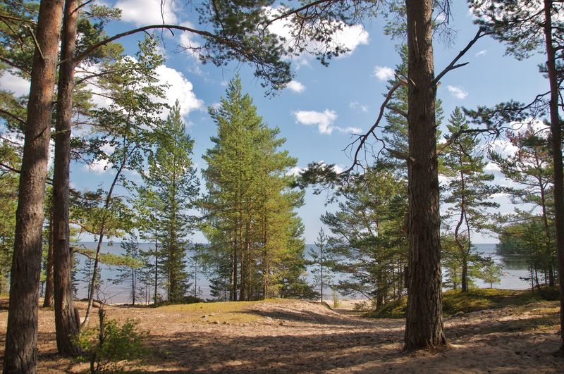Beauty In Nature Forest Lake Land Landscape Nature Pine Tree Pine Woodland Scenics - Nature Sky Tranquility Tree WoodLand