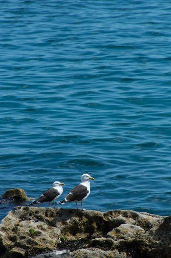 Two Seagulls On Rocks Next To Sea