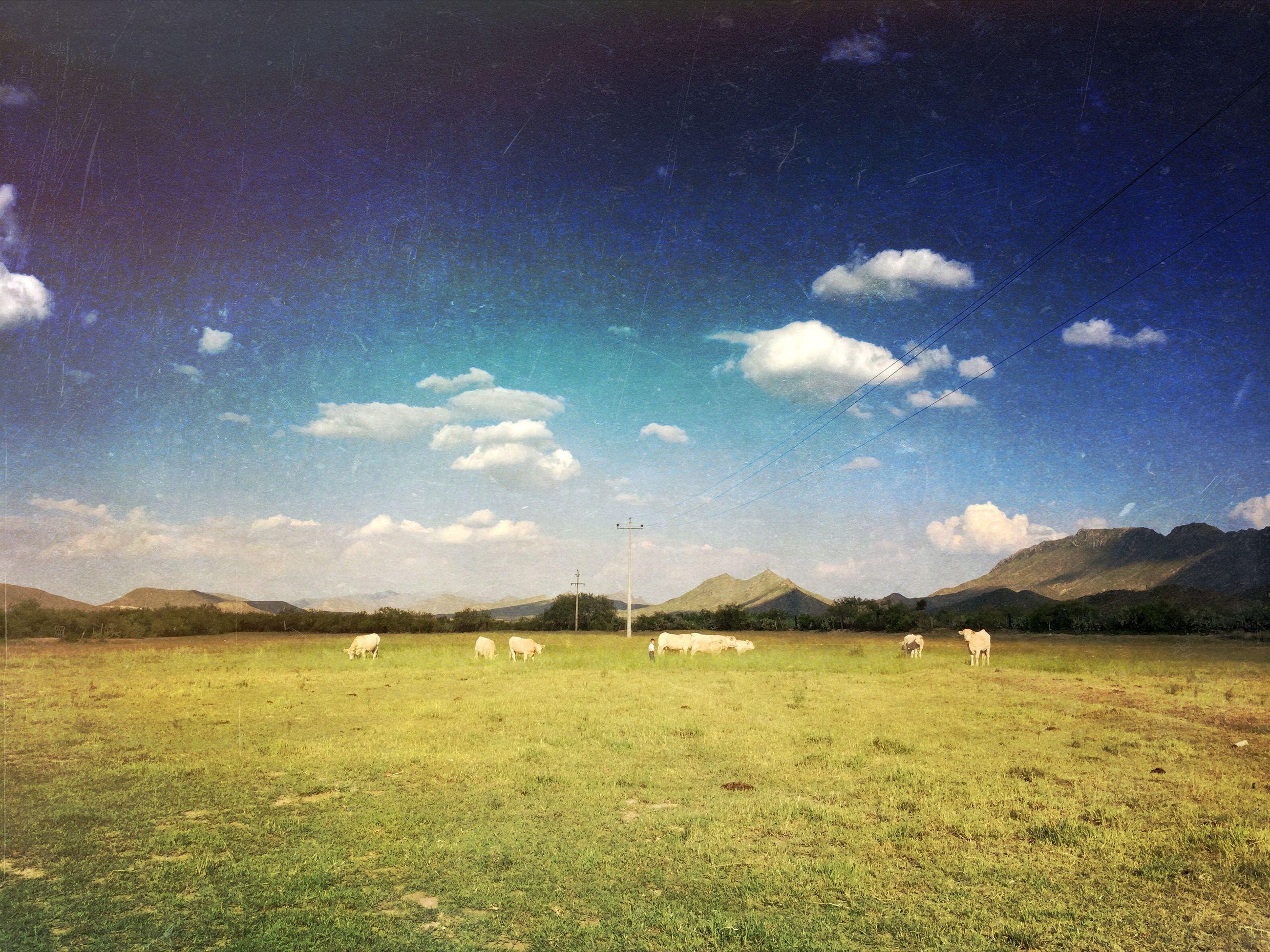 animal themes, mountain, sky, landscape, tranquil scene, tranquility, scenics, grass, domestic animals, mountain range, beauty in nature, field, nature, cloud - sky, livestock, cloud, mammal, grazing, non-urban scene, idyllic