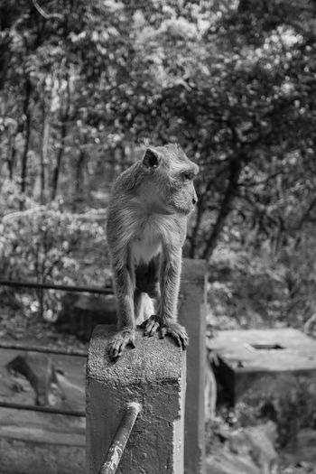 Animal Themes Animal Wildlife Animals In The Wild Close-up Day EyeEmNewHere Focus On Foreground Mammal Monkey Nature No People One Animal Outdoors Squirrel Tree
