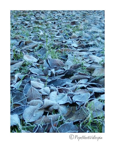 Frozen Nature Pola De Siero Poladesiero Naturephotography Nature Is Art No People IceTime Frost Naturelovers Frosty Nature Nature