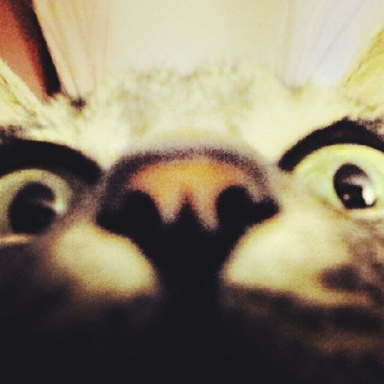 Cat Cat♡ Animal Love Simpatia