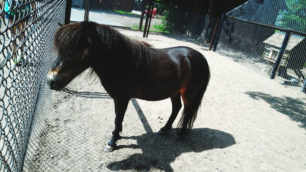 Horse Pony Little Horse Animal Animals Nature Nature_collection