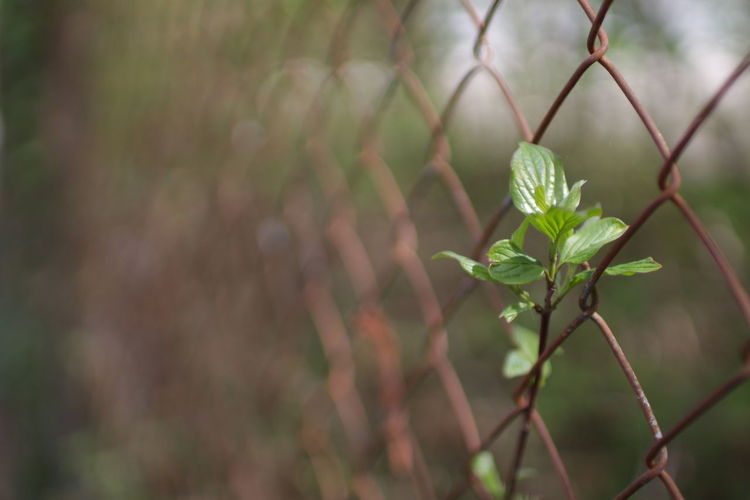 Spring Plant Life Botany Spring Springtime Beauty In Nature Nofilter No People Defocused Leaf Protection Close-up Plant Sky Chainlink Fence Fence Safety Locked Security Boundary