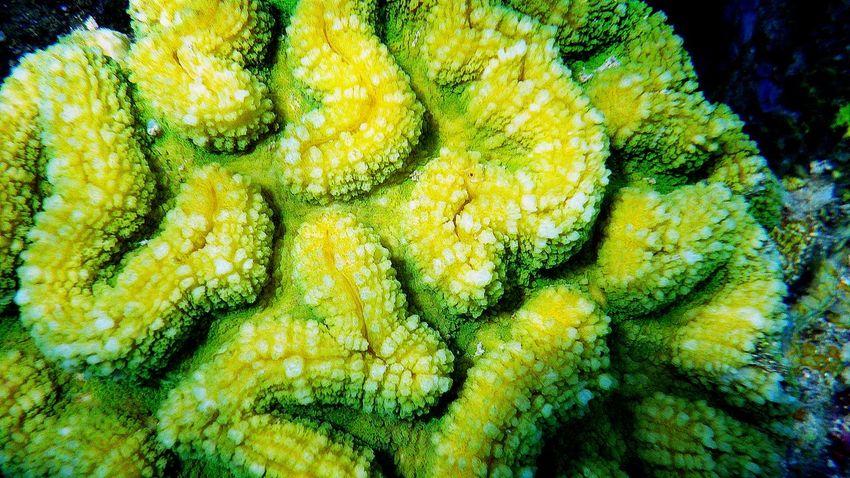 Brain Corals Coral Reefs Corals Coron, Palawan Hard Corals Maze Corals Mushroom Corals Pillar Corals Snorkeling Photo Soft Corals Sponge Corals Staghorn Corals Tube Corals Underwater Photos Underwater Photoshoot Underwaterphotography