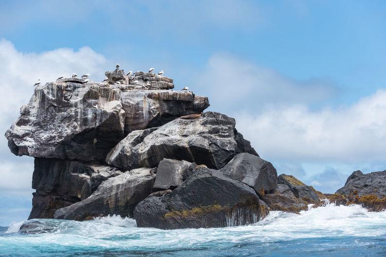 Bird Rock Formation South America Galapagos Islands Ecuador Galapagos Wonderful Nature Sealife Birdwatching Sea Rock - Object Sky Beach Nature Water Beauty In Nature Outdoors Cloud - Sky Blue Scenics