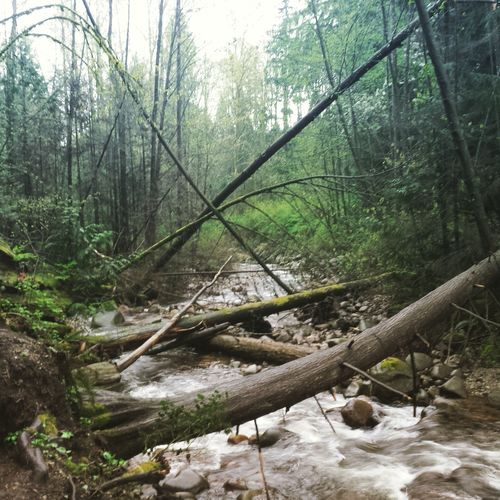 River Nature Landscape Outdoors Tranquil Scene North Vancouver Mosquito Creek