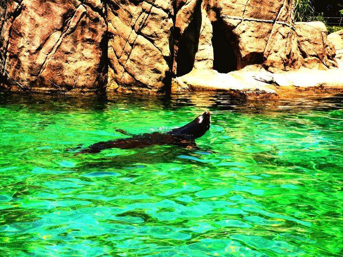 Sea lions at