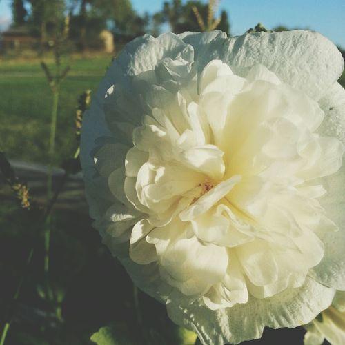 Flower Porn
