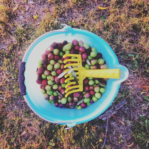 Directly above shot of olives in plastic bucket on field
