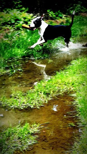 First Eyeem Photo Pitbull Water Fun Waterplay Stick Fast Gone Crazy