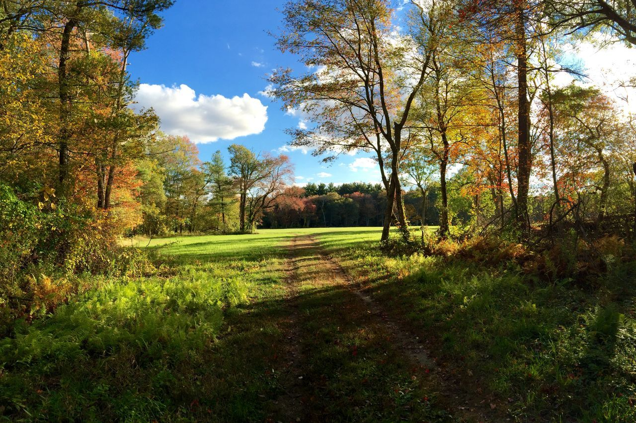 Trail Amidst Trees On Field During Autumn