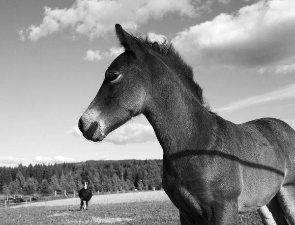 Blackandwhite Horses Sweet Little Horses FridayLove