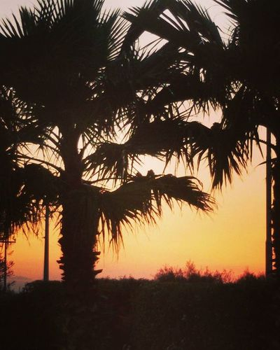 Sky Sunset Party Treepalm Sun WOW