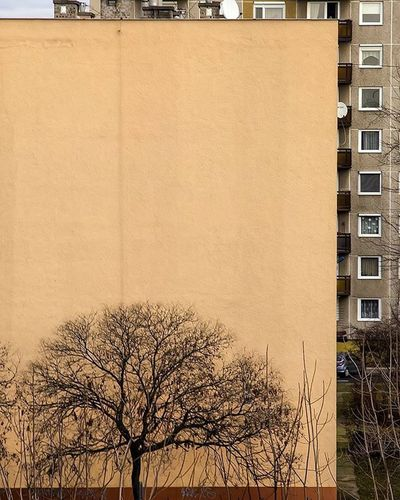 This lonely tree standing still in the shadow of a wall in a residential area of Budapest EEprojects Budapest Urbanscene Streetphotography Architecture Symmetricalmonsters Architecturephotography Designer  Office Minimal Building Blockofflats Cbviews LiveTravelChannel Canon_photos Moodygrams Exterior Tree Environment Exploretocreate Lookingup_architecture Cbviews Realestate Property Modernarchitect urbexthisisbudapestminimalismofficialminimal_lookupheatercentralsuperhubs