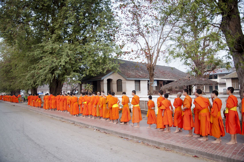 Monks Collecting Alms - Luang Prabang - Laos ALMS Buddhist Sarong Collecting Alms In A Row Laos Luang Prabang Monks Orange Color