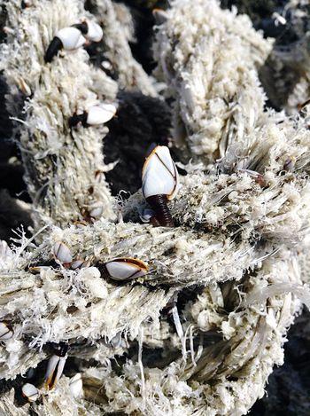 Rope Relaxing Taking Photos Enjoying Life Animals Ocean Hello World Corralejo