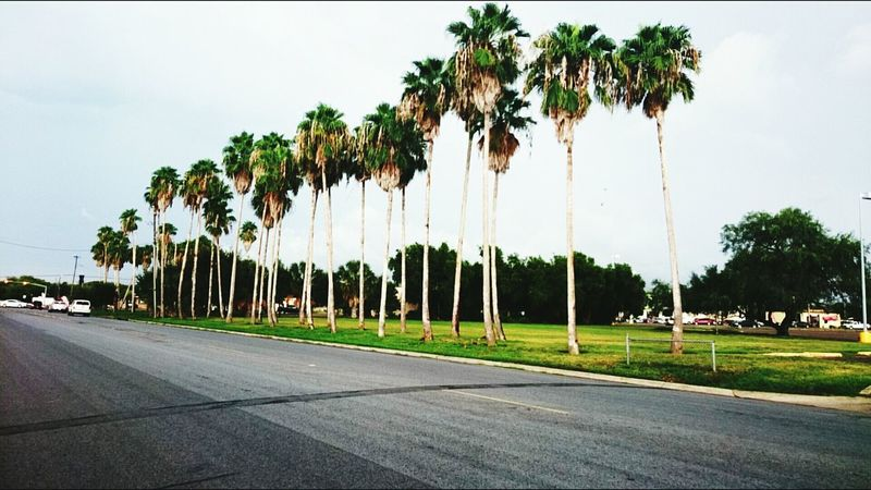 Palm Trees Texas Street Photography Blue Sky Grounded Nice Day